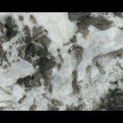 White_Aspen
